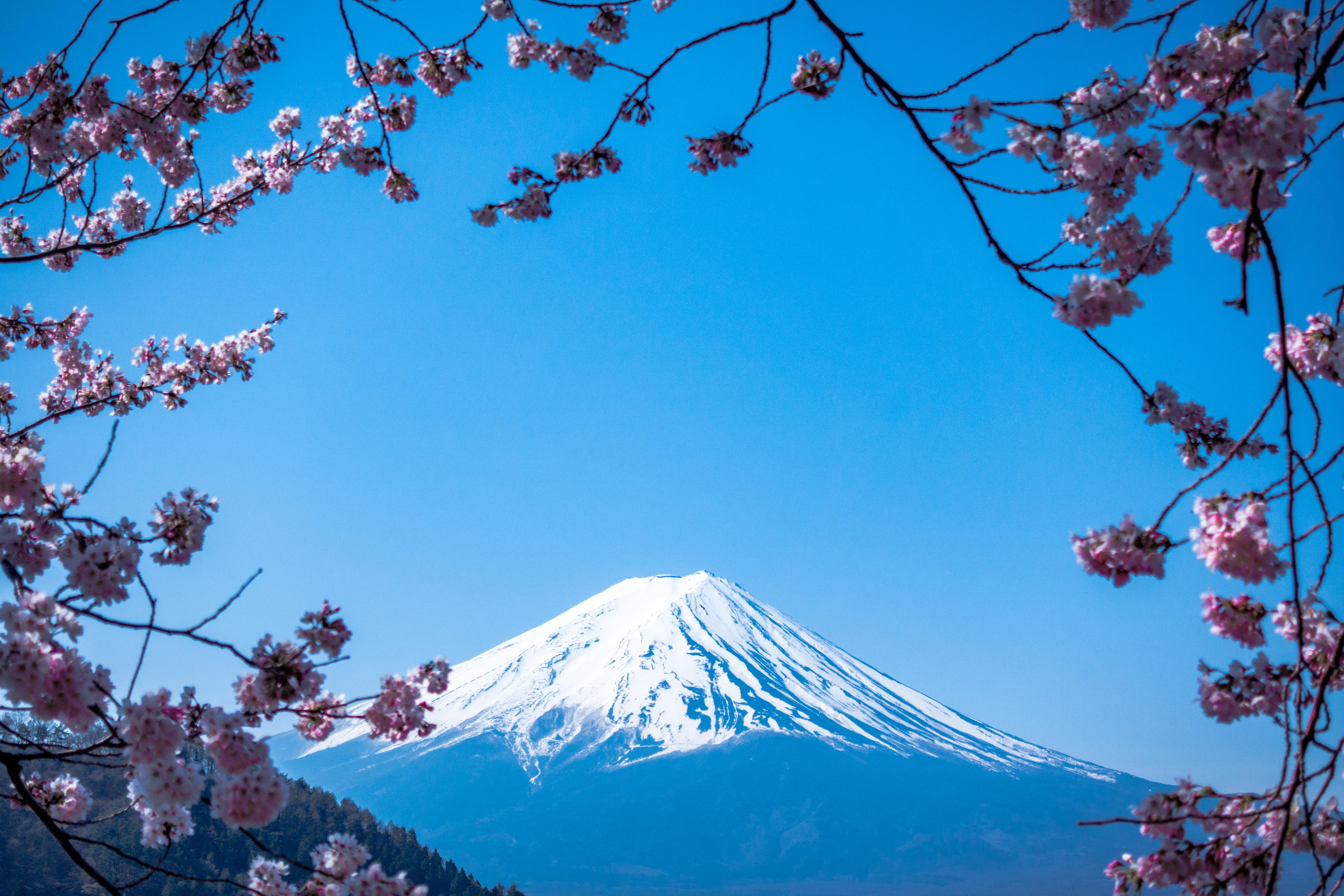 静岡のアンテナショップが東京に!アクセスやおすすめの名産品は?