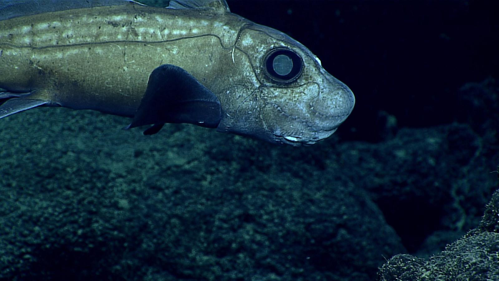 世界一深い海「マリアナ海溝」の謎に迫る!場所や最深部の深さ・生息する生物は?