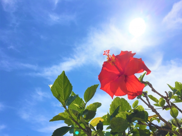 沖縄のユタでよく当たると有名なのは誰?おすすめの霊能者や選び方まで紹介!