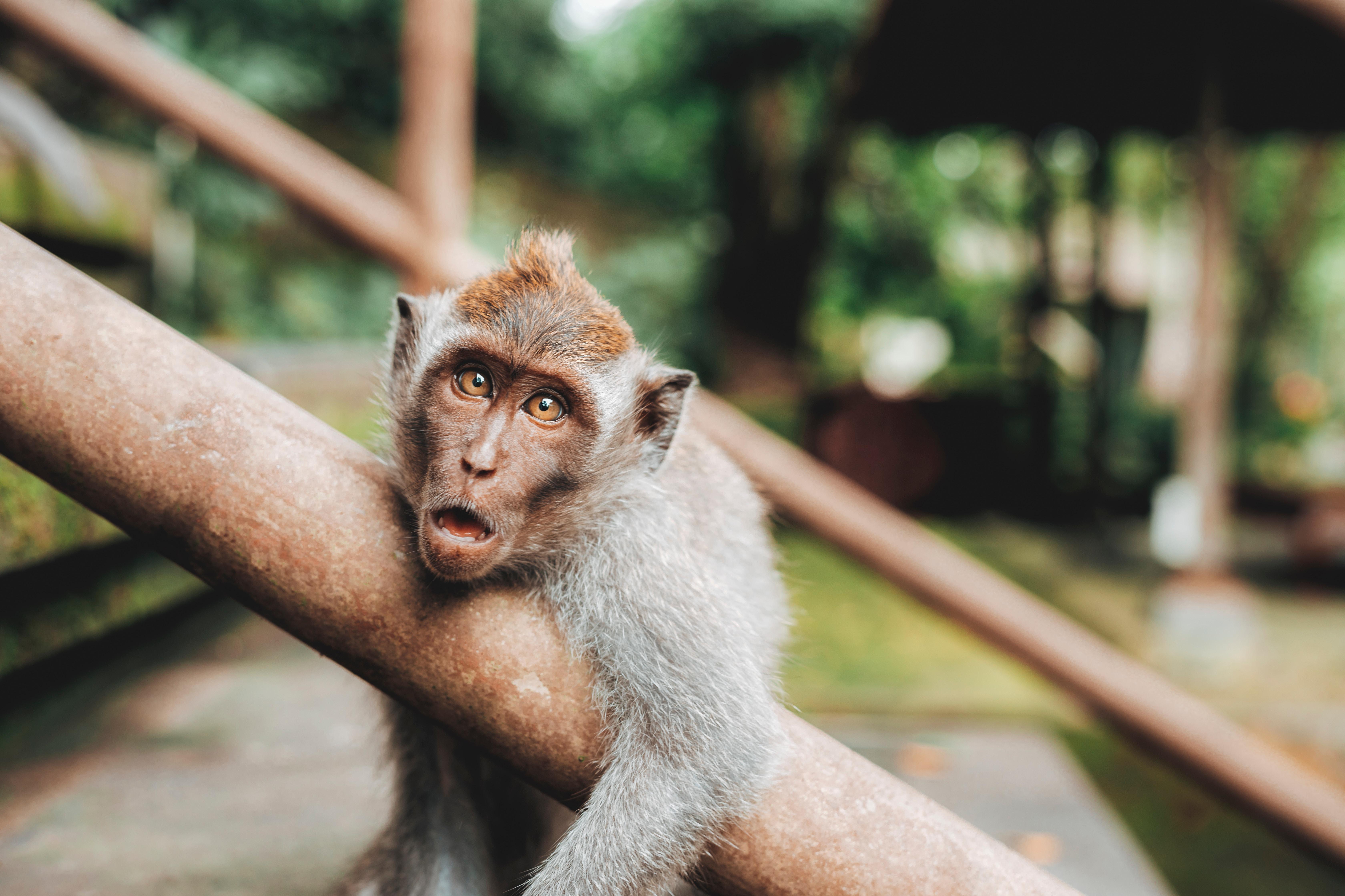 ミニミニ動物園は入場料が無料?沖縄の人気スポットをご紹介!
