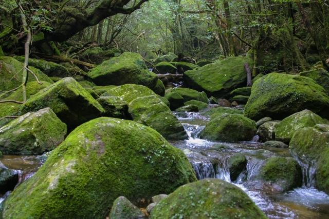 白谷雲水峡は屋久島の絶景観光スポット!トレッキングのコースや所要時間は?