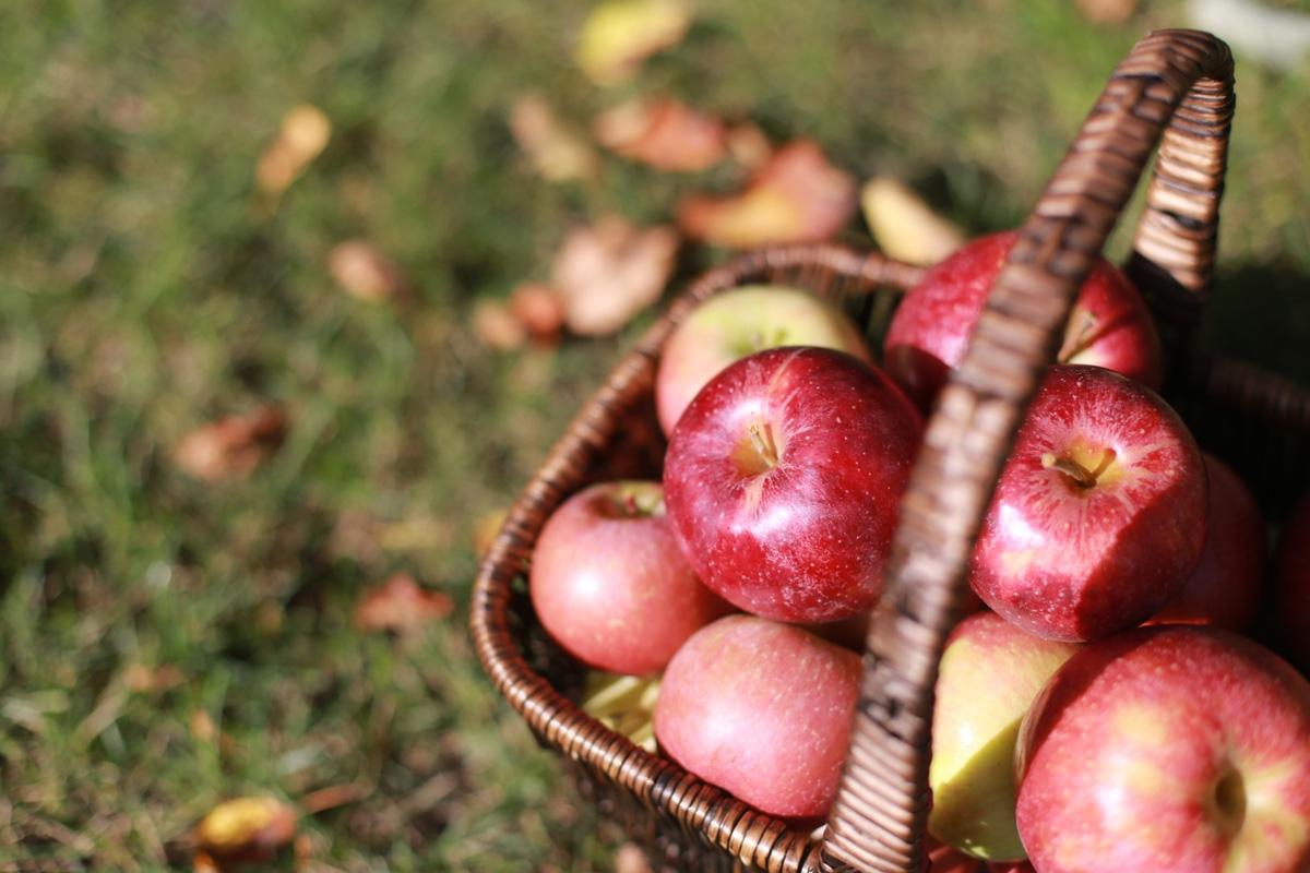 りんご公園は青森弘前市の人気スポット!りんご狩りやアップルパイがおすすめ!