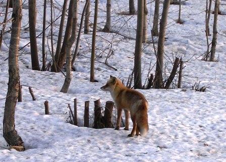 旭山動物園へのアクセス方法は?お得なきっぷのおすすめ情報もご紹介!