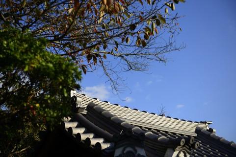 椿大神社は恋愛成就で有名なパワースポット!お守りや御朱印もご紹介!