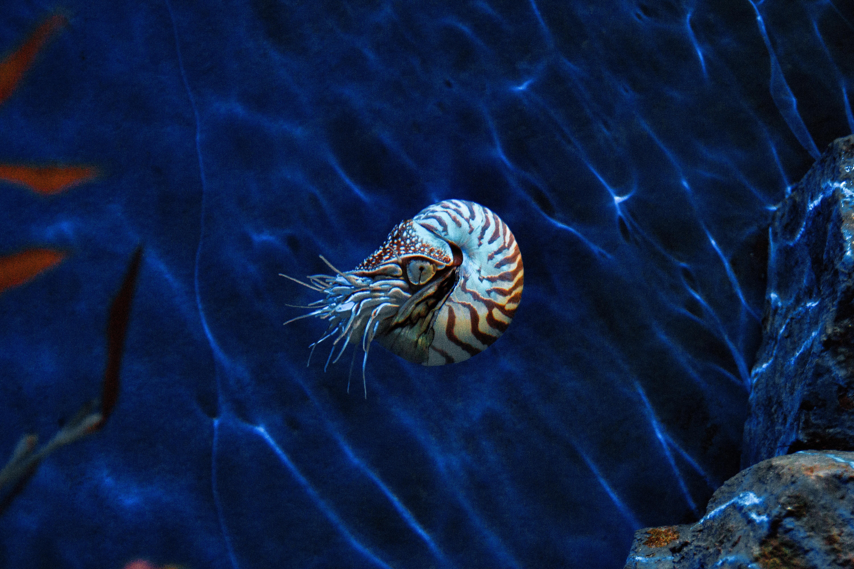 深海プリンは沼津で生まれた大人気の新土産!気になる味・値段・賞味期限は?