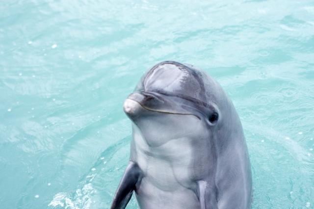 静岡の水族館ランキングTOP7!クラゲやイルカに癒される人気スポット紹介