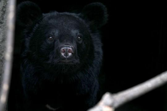 北海道で熊が出没する場所は?観光客が注意する登山ルートやエリアをチェック!