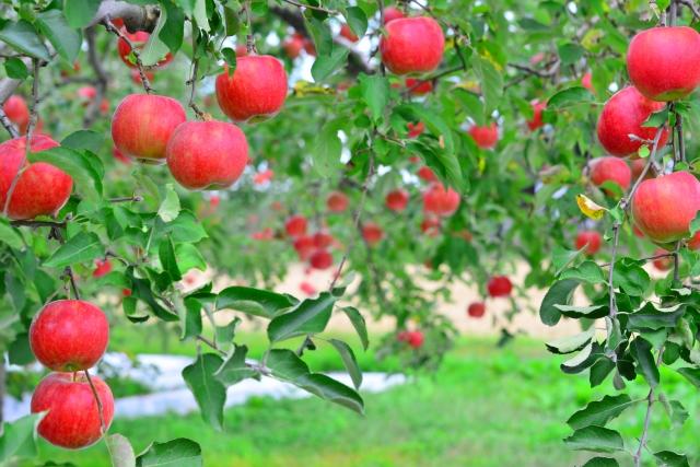 mi cafe(ミカフェ)は盛岡のりんご畑の中にあるカフェ!人気メニューは?