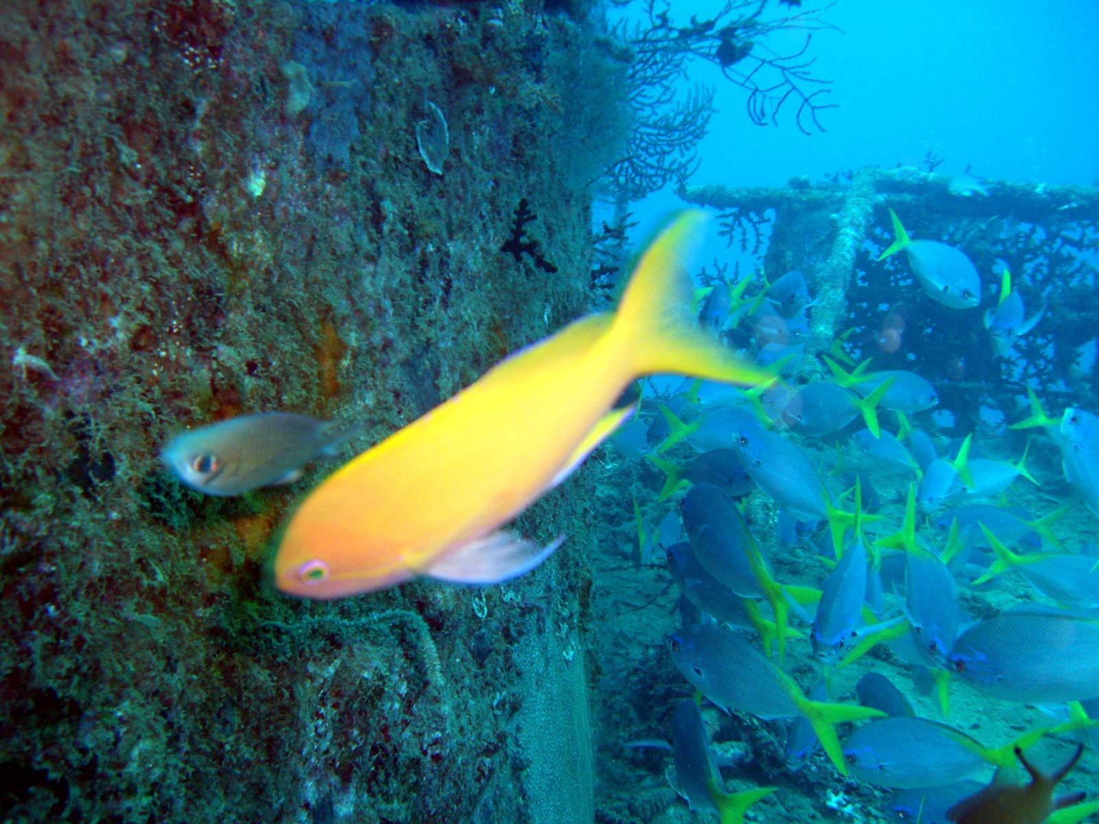 奄美大島のダイビングを完全ガイド!おすすめのスポットやベストシーズンを紹介