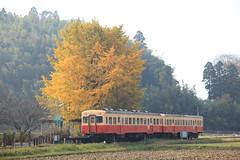 小湊鉄道は千葉のローカル線!人気の観光スポットやおすすめグルメは?