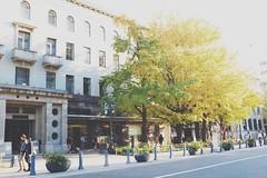 日本大通りでランチするならココ!人気のおしゃれカフェやおすすめ店を厳選!