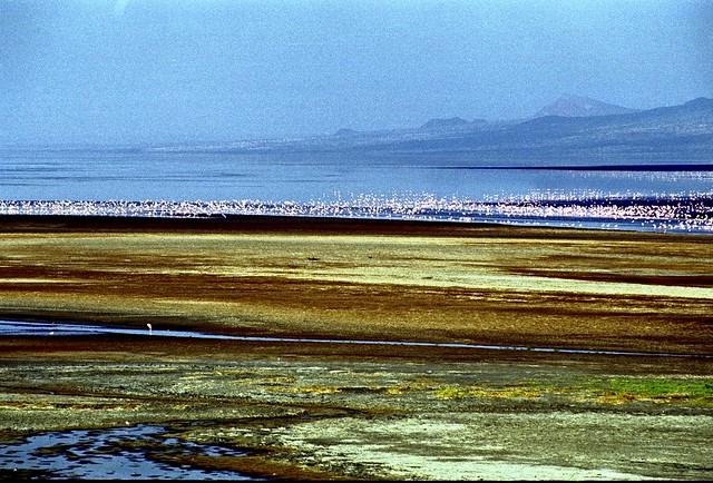 ナトロン湖で動物たちが石化!タンザニアの観光スポットの恐怖に迫る!