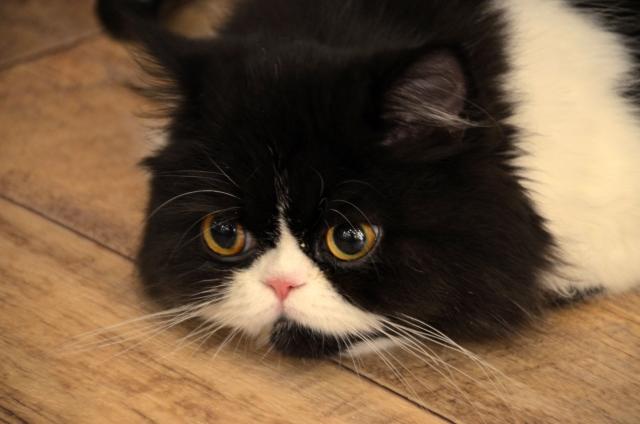 福岡の猫カフェランキングTOP9!おすすめ店の料金やアクセスもご紹介!