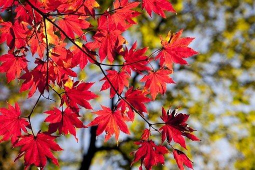 真名井の滝は高千穂にある名瀑!紅葉など見どころもご紹介!
