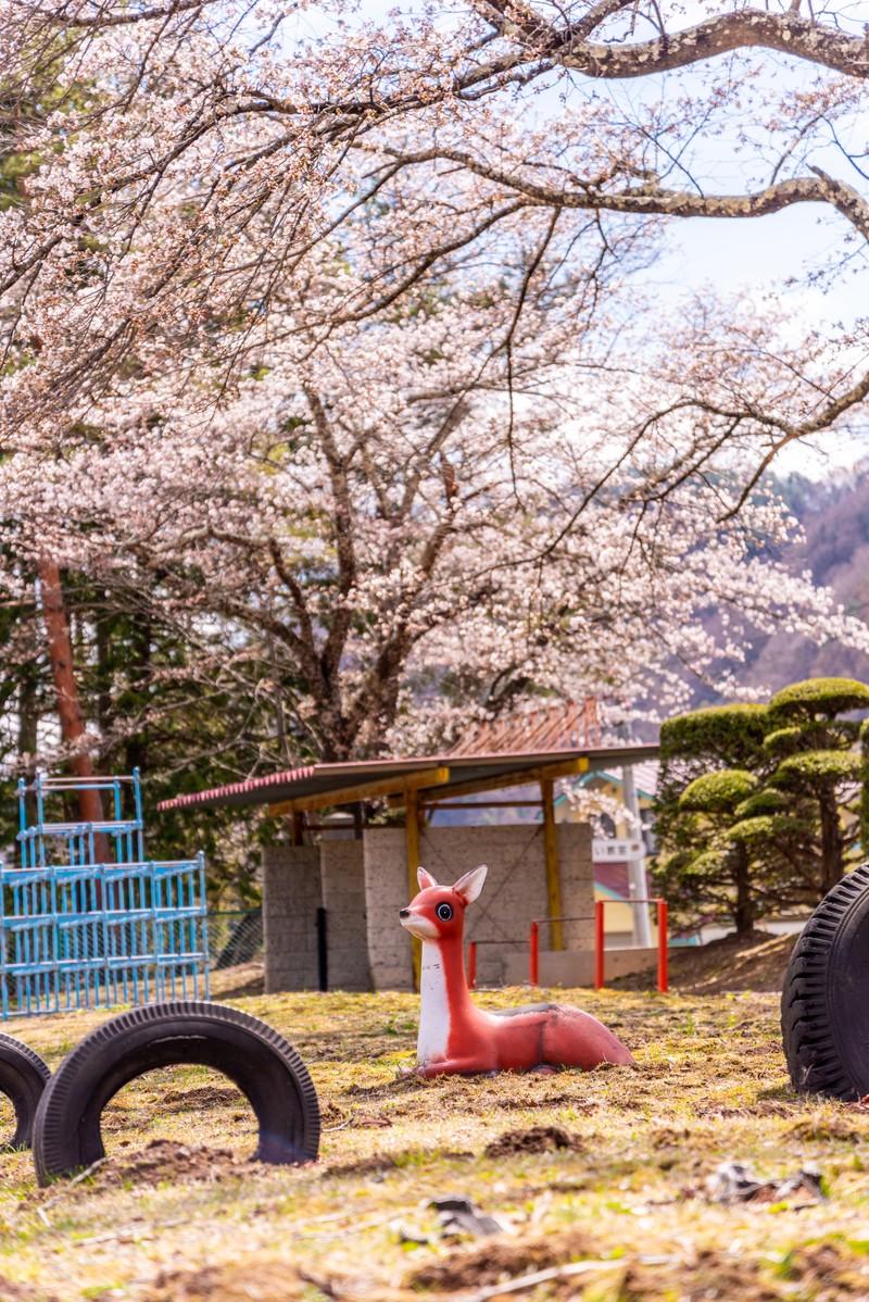 西海橋公園(佐世保)はおすすめのお出かけスポット!アスレチックや桜を堪能!