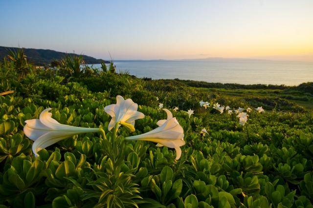 御神崎は石垣島最西端の絶景スポット!灯台から見る夕日もおすすめ!