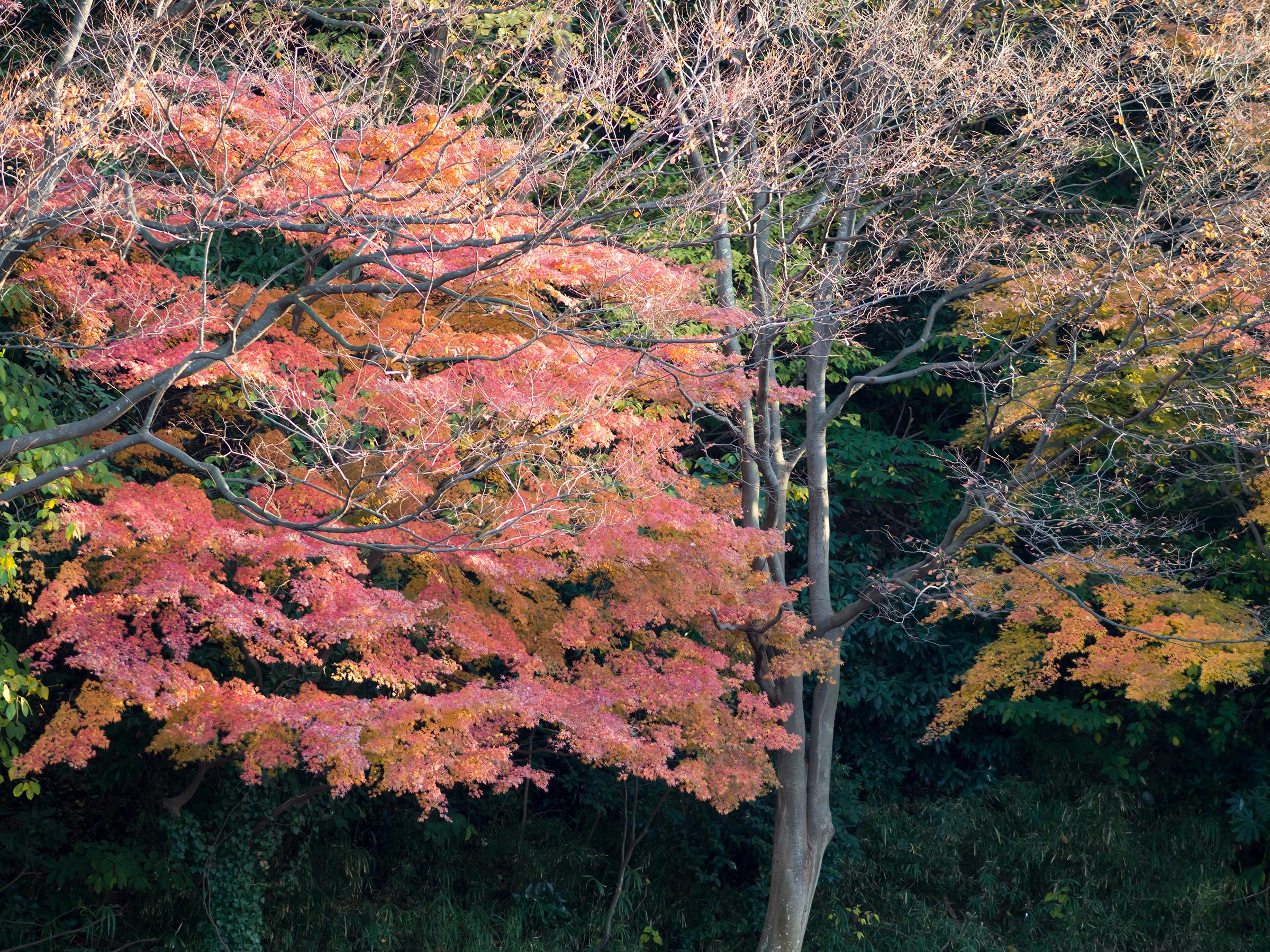 光明寺は京都有数の紅葉の名所!アクセスや御朱印・拝観料もチェック!
