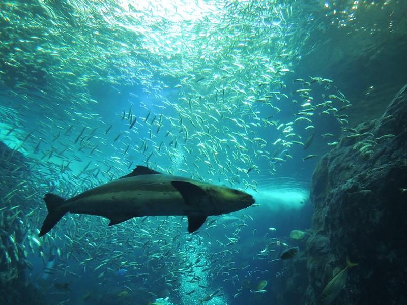 釧路初の水族館「くしろ水族館ぷくぷく」が人気!美しい魚の世界を楽しもう!