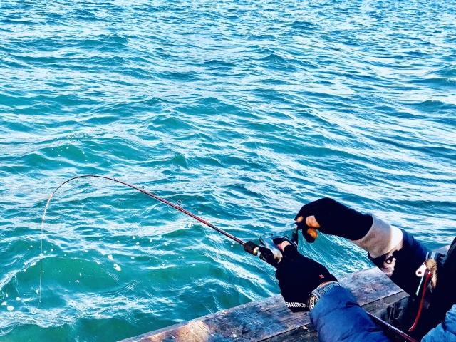知多半島で人気の釣りポイント11選!初心者にもおすすめのスポットもあり!