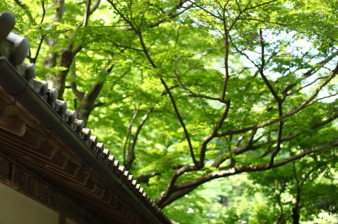 【滋賀】教林坊は風情ある石の寺!公開日や紅葉情報・拝観料もチェック!