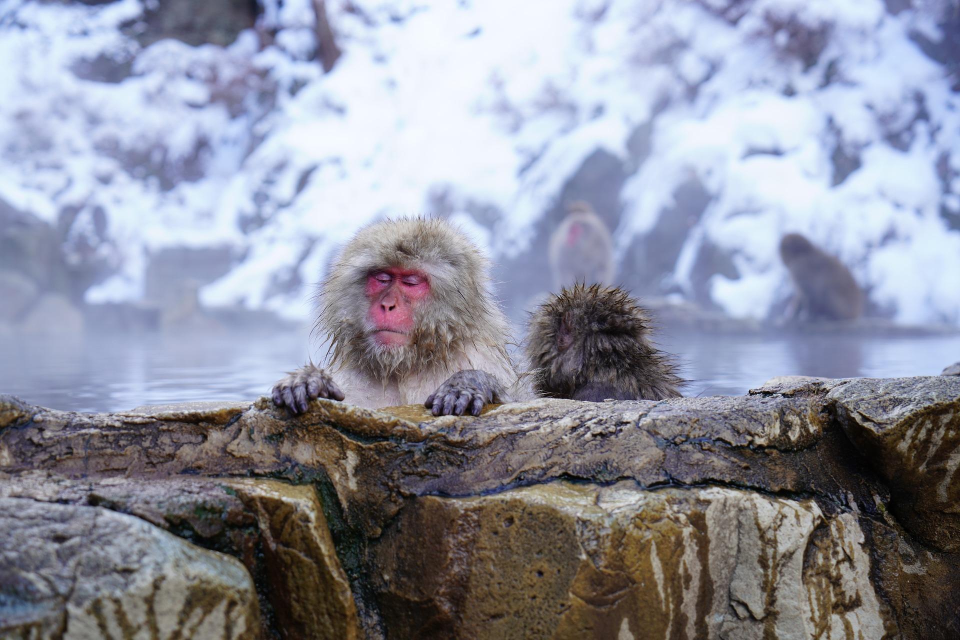 鶴の湯温泉(秋田)はメディアでも紹介された有名な秘湯!日帰り入浴も人気!