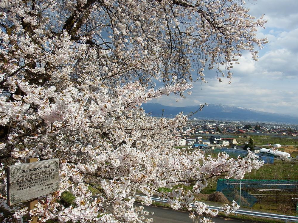 山辺町は山形県のおすすめ観光スポット!人気のラベンダーソフトクリームとは?