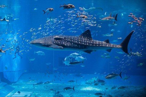 大分の水族館「うみたまご」の割引券・クーポン情報まとめ!お得な料金で遊ぼう