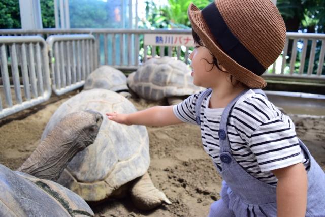 雨でも楽しめる伊豆の観光スポットおすすめ23選!子供が喜ぶ屋内施設ばかり!