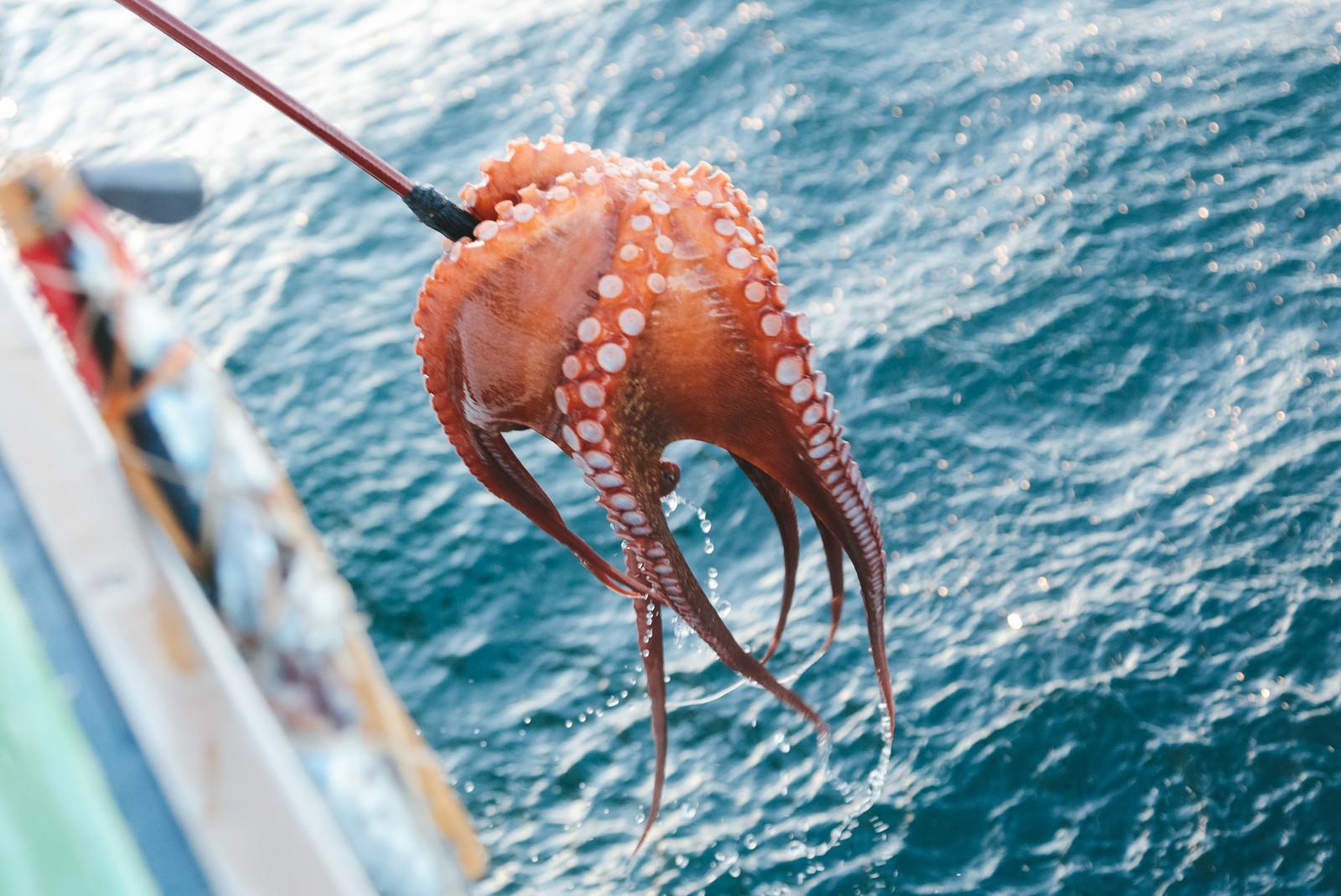 鹿島港の釣り情報をチェック!おすすめのポイントや釣れる魚の種類もご紹介!