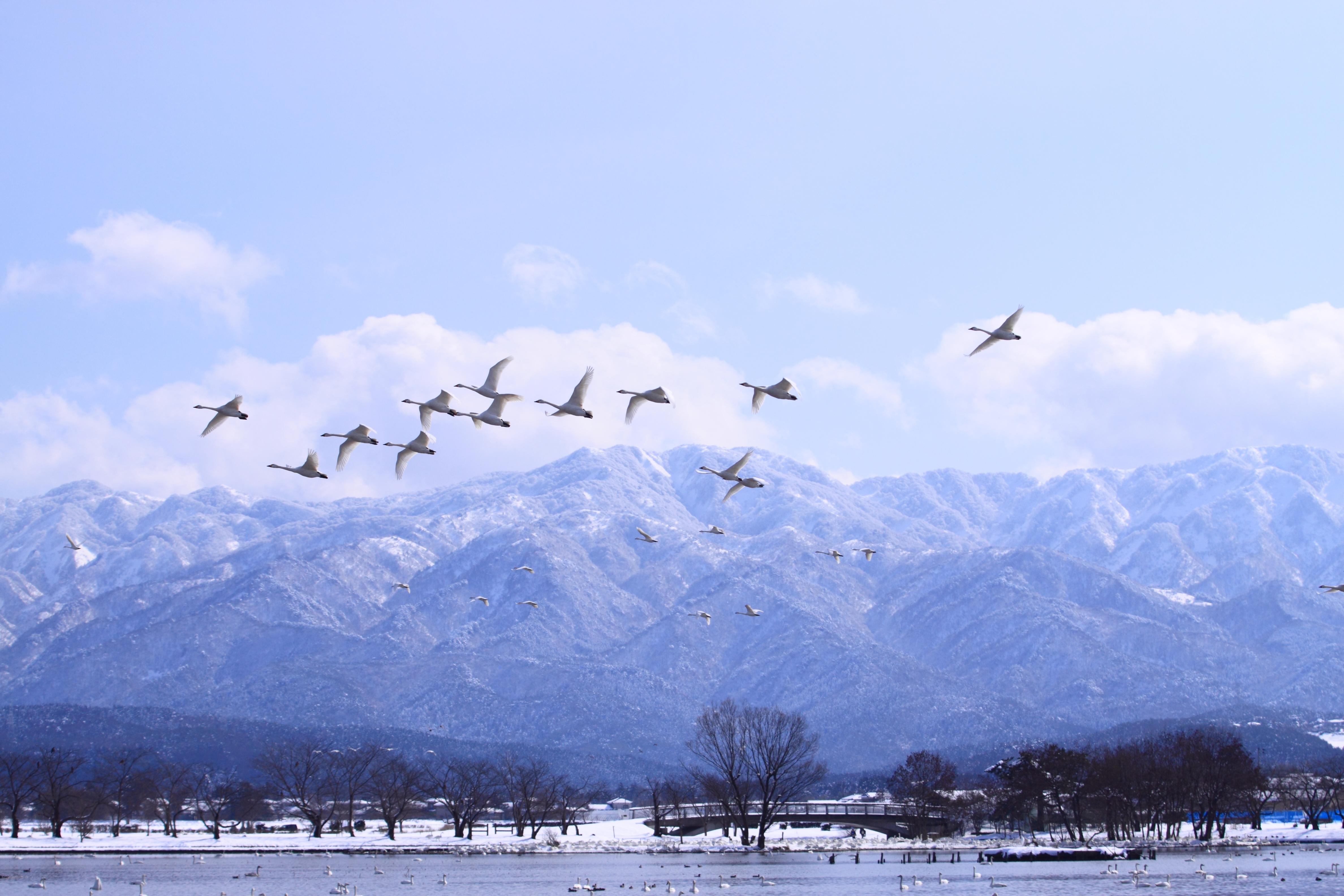 阿賀野市でのどかな景観を楽しもう!名物グルメやおすすめ観光スポットも紹介!