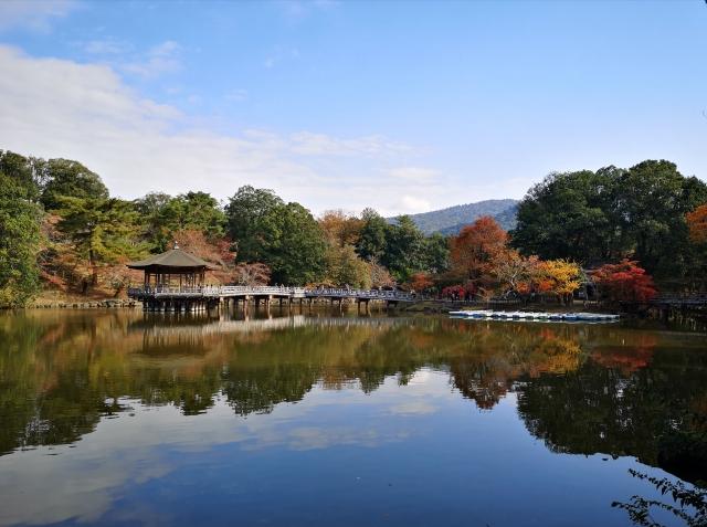奈良のインスタ映えスポット15選!人気観光地からおしゃれなカフェまで!
