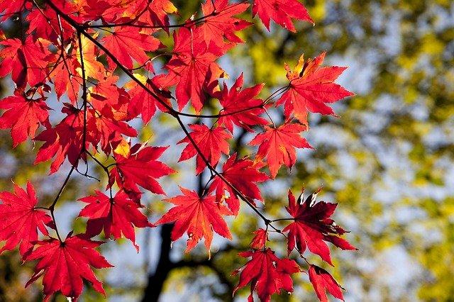 富山県で人気のおすすめ紅葉スポット17選!美しい絶景の名所から穴場までを調査