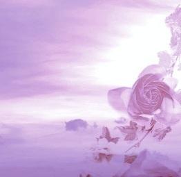 rain_and_rose