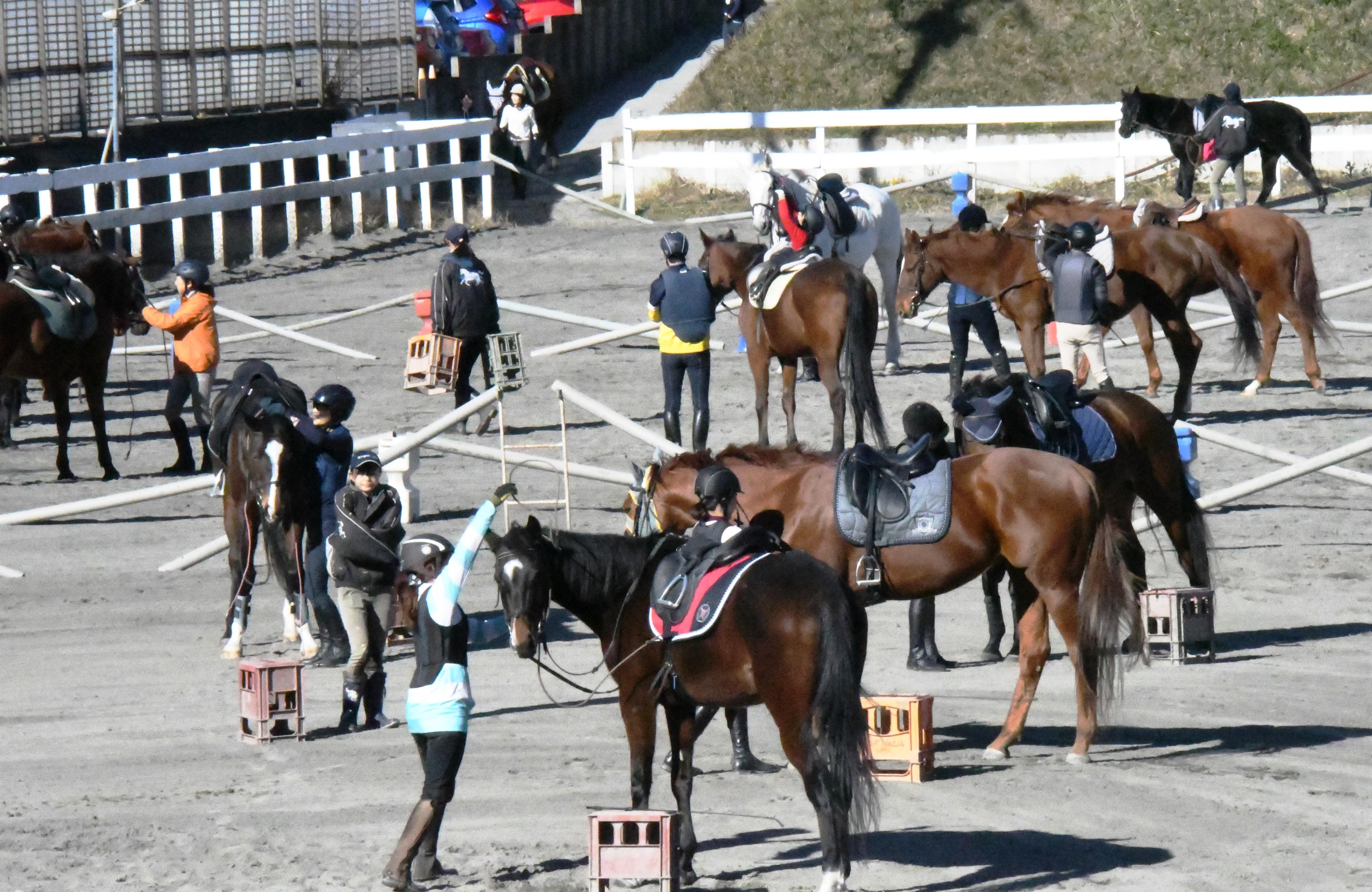約230頭の馬たちがお待ちしています♪