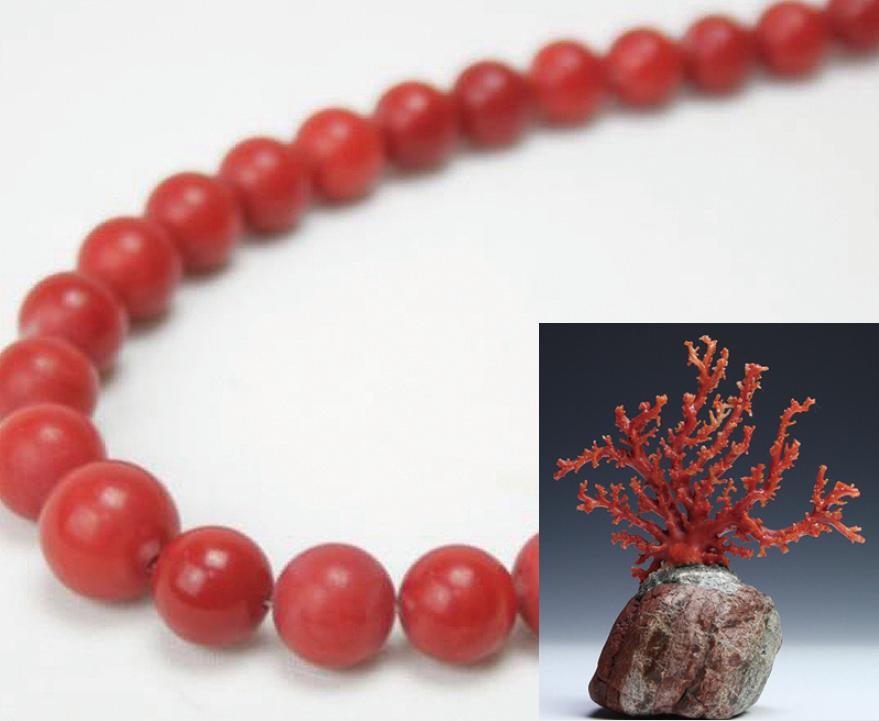 サンゴ・赤珊瑚