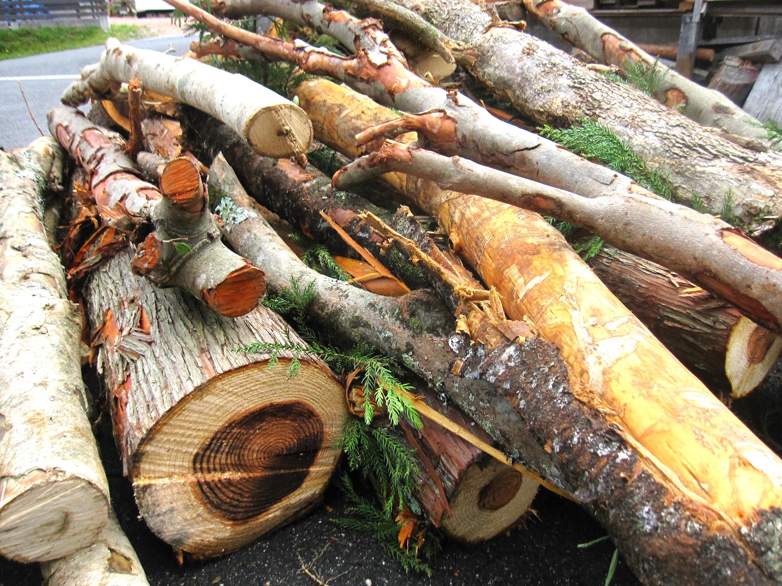 害虫駆除・草木水やり・伐採・除草