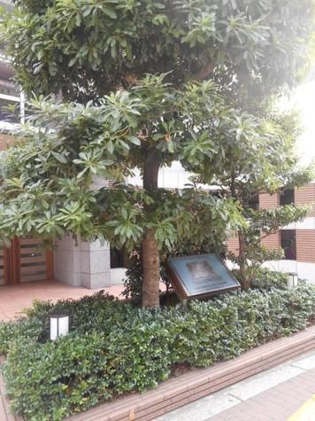 ライオンズプラザ五反田 Building Image10