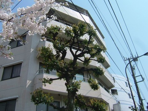 リバティハウス柿の木坂 Building Image3