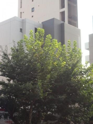 Crescent Court (クレセントコート) 建物画像9