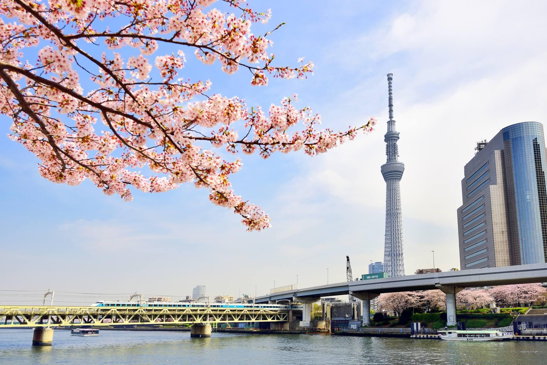 東京のお花見!おすすめTOP3