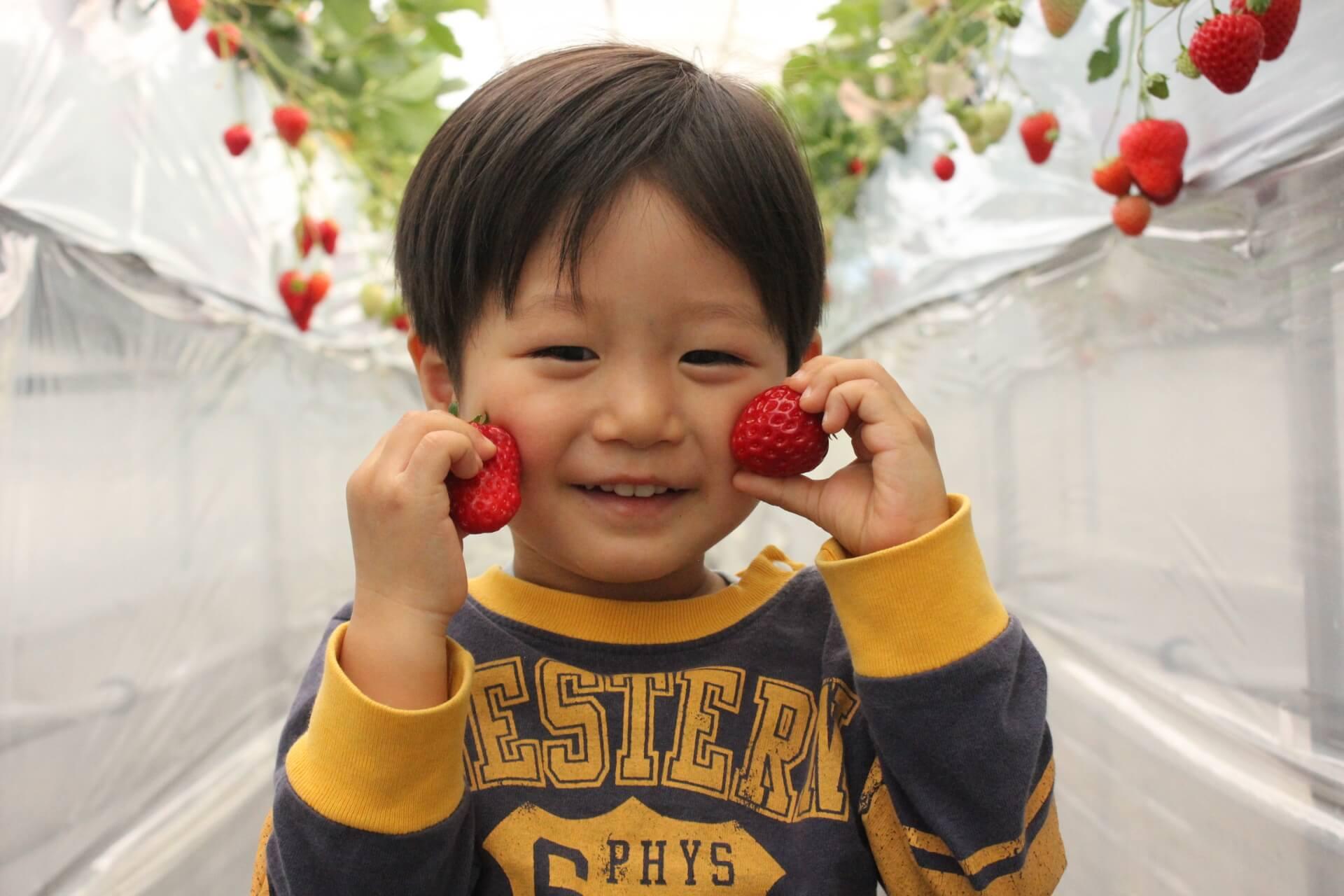 京都でおすすめのイチゴ狩りスポット!