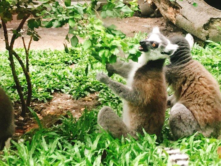 サイゴン動植物園の観光(レストラン、ショップ、エステ)
