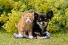 可愛い子犬と子猫
