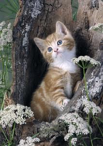 愛くるしい猫たち