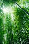 新緑の清々しい景色