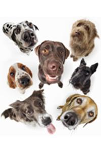犬のいろんな表情