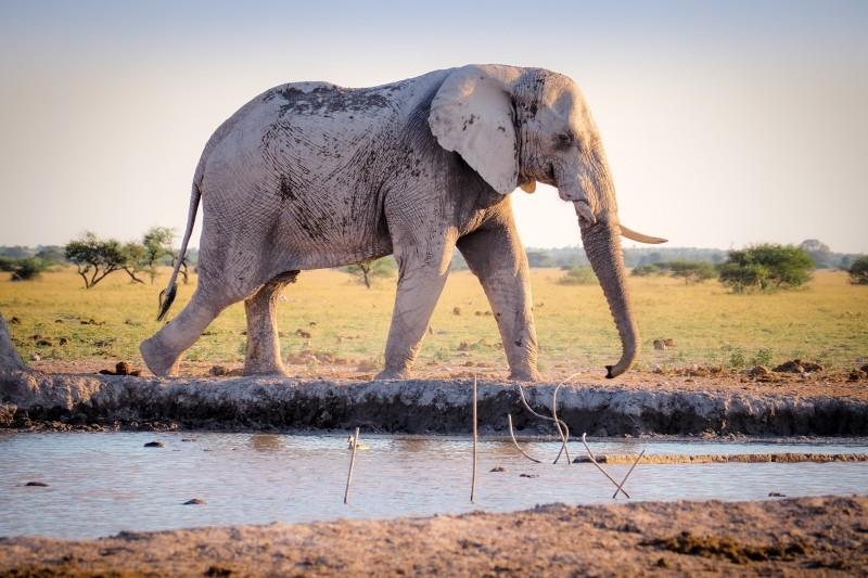 何をしたいか決めるのは自分!退屈な大学生活の果て、目指したのは象使いへの道