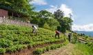 自然豊かな山村で農作業や地域活動も楽しむ暮らし