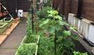緑豊かな里山や田園と利便性の高い都市が融合する横浜市青葉区。庭の菜園や近くの菜園で野菜作り。自給的な食のある暮らしを楽しんでいます。