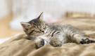 京都近郊のプチ田舎で猫と暮らす! 猫好き&田舎好き&シャイな大人のためのシェアハウス